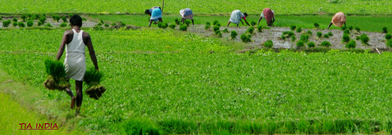 india agri TIA