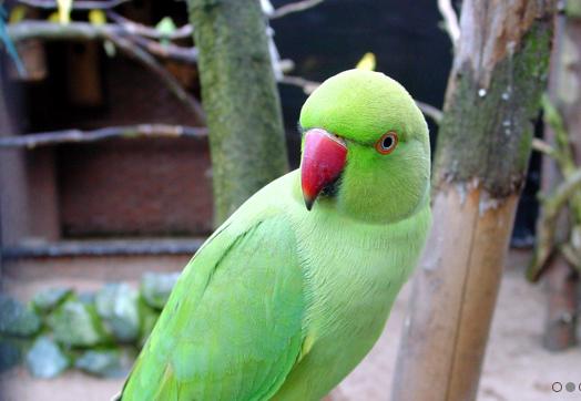 parrot zoo