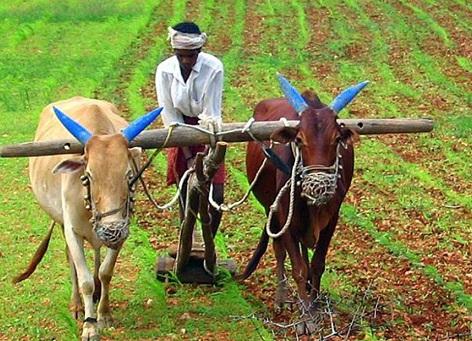 किसान को सरकारे कब तक कूचलते रहेगी