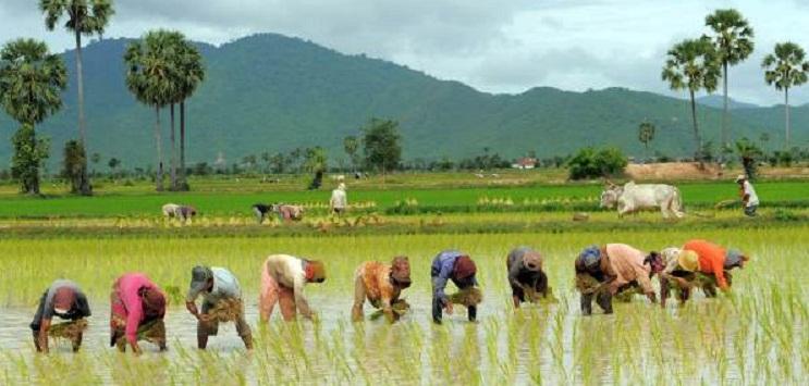FARMING India