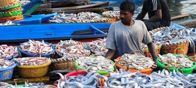 fish india