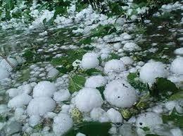 Thunderstorm calamity: Kisan Sabha seeks compensation for farmers