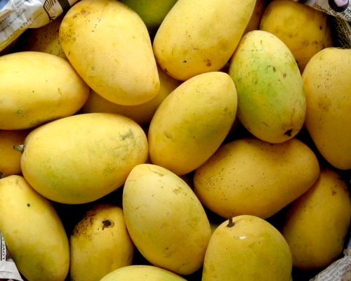 UP Mangoes to hit fruits market in Italy